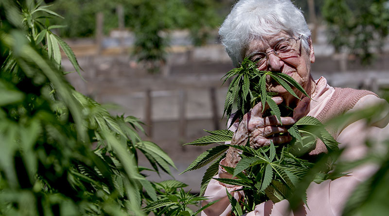 YouTube star Aurora Leveroni, also known as Nonna Marijuana, has reached more than 1.5 million views on YouTube. (Photo by Sean Logan/News21)
