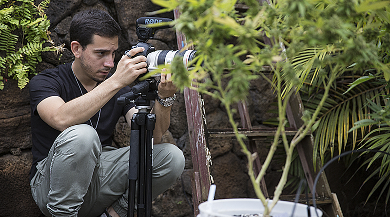 Matias J. Ocner photographs marijuana plants at a caregiver's home in Oahu. (Photo by Rilwan Balogun/News21)