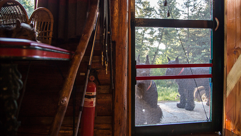 Kohl and Drake, the Siglers' two giant schnauzers, peer into the cabin as they wait to be let back inside.